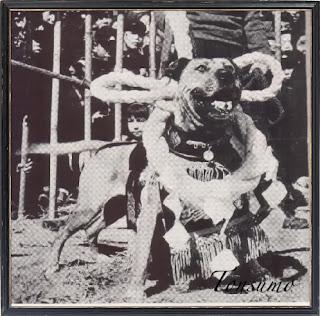 Japanese mastiff dogo