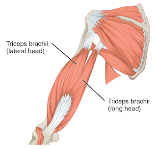 Compound exercises for triceps, tricep