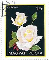 Selo Rosa Pascali