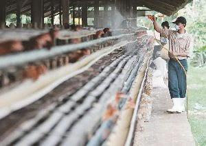 proses desinfeksi dengan menggunakan desinfektan pada peternakan