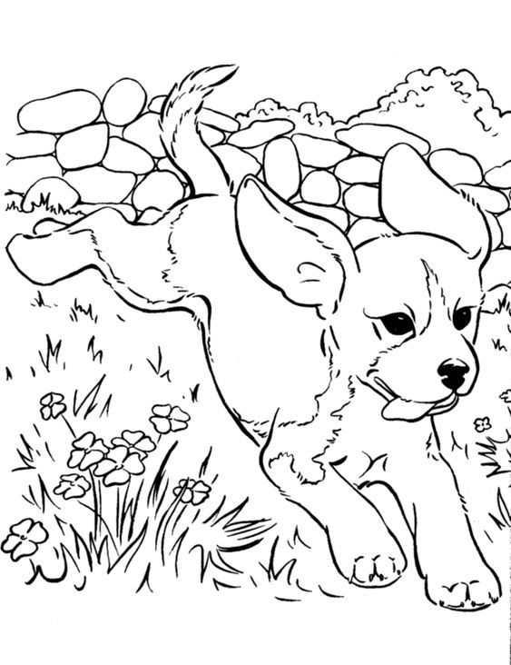 Dogs coloring pages 42