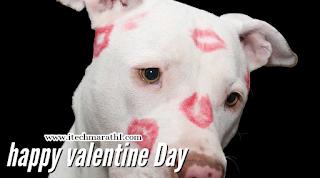 व्हॅलेंटाईन डे फोटो valentine's day photo, valentine day foto
