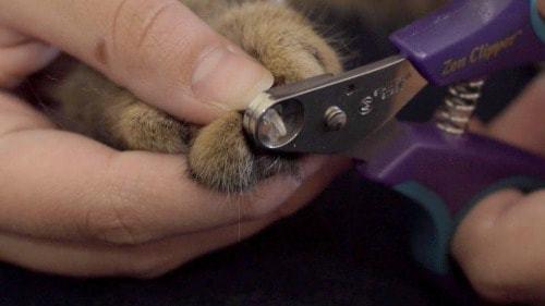 Zen Clipper|worry free nail trimmer