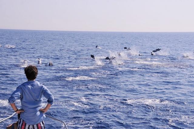 TURISMO: Principado de Mônaco lança nova atração turística, observação de baleias e golfinhos