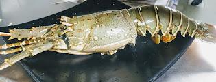 Fresh lobster for lobster hot garlic sauce recipe