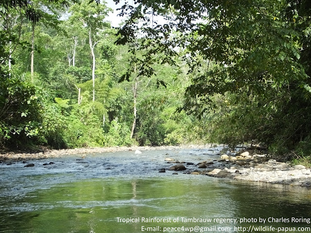 Rainforest tour in Indonesia