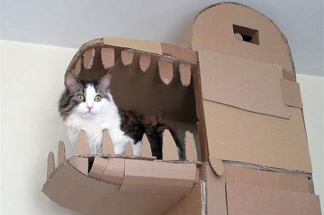 Sam just took cardboard cat houses to a whole new level