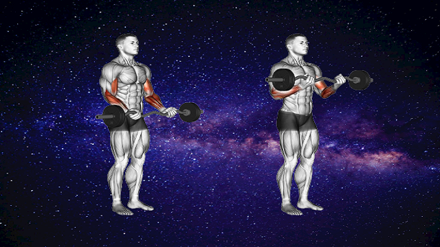 Standing weight Curl