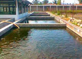 gambar kolam lele