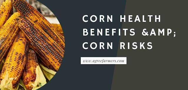 Corn Health Benefits & Corn Risks