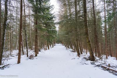 Zejście z Dzikowca Wielkiego w kierunku południowo-wschodnim; przyjemna szeroka ścieżka
