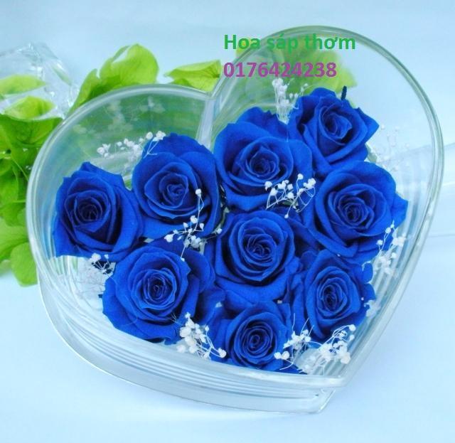 Hoa hong sap thom vinh cuu tai Phu Luong