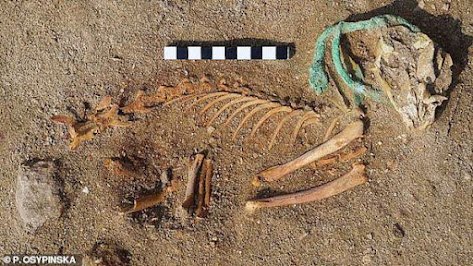 Remains of cat at world's first pet cemetry in Egypt