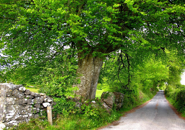 image of a big green tree and a road