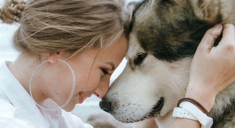La ciencia confirma que los perros reconocen fácilmente a una persona mala