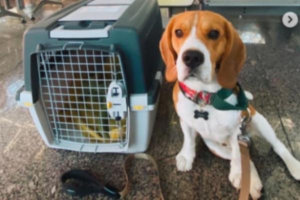 Камера сняла издевательства над псом при перелете из Сочи в Петербург