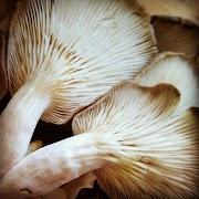 Mushroom Training Center Goa |  Mushroom spawn supplier | Mushroom Training
