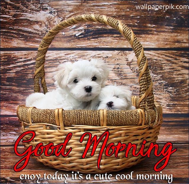 Beautiful Good Morning photo free Images download Pictures Photos Pic In Hindi