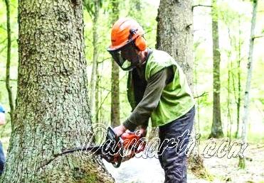 Arti Mimpi Tentang Pohon Menurut Ahli