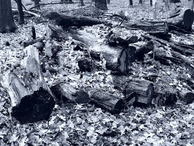 Vergessenes Holz