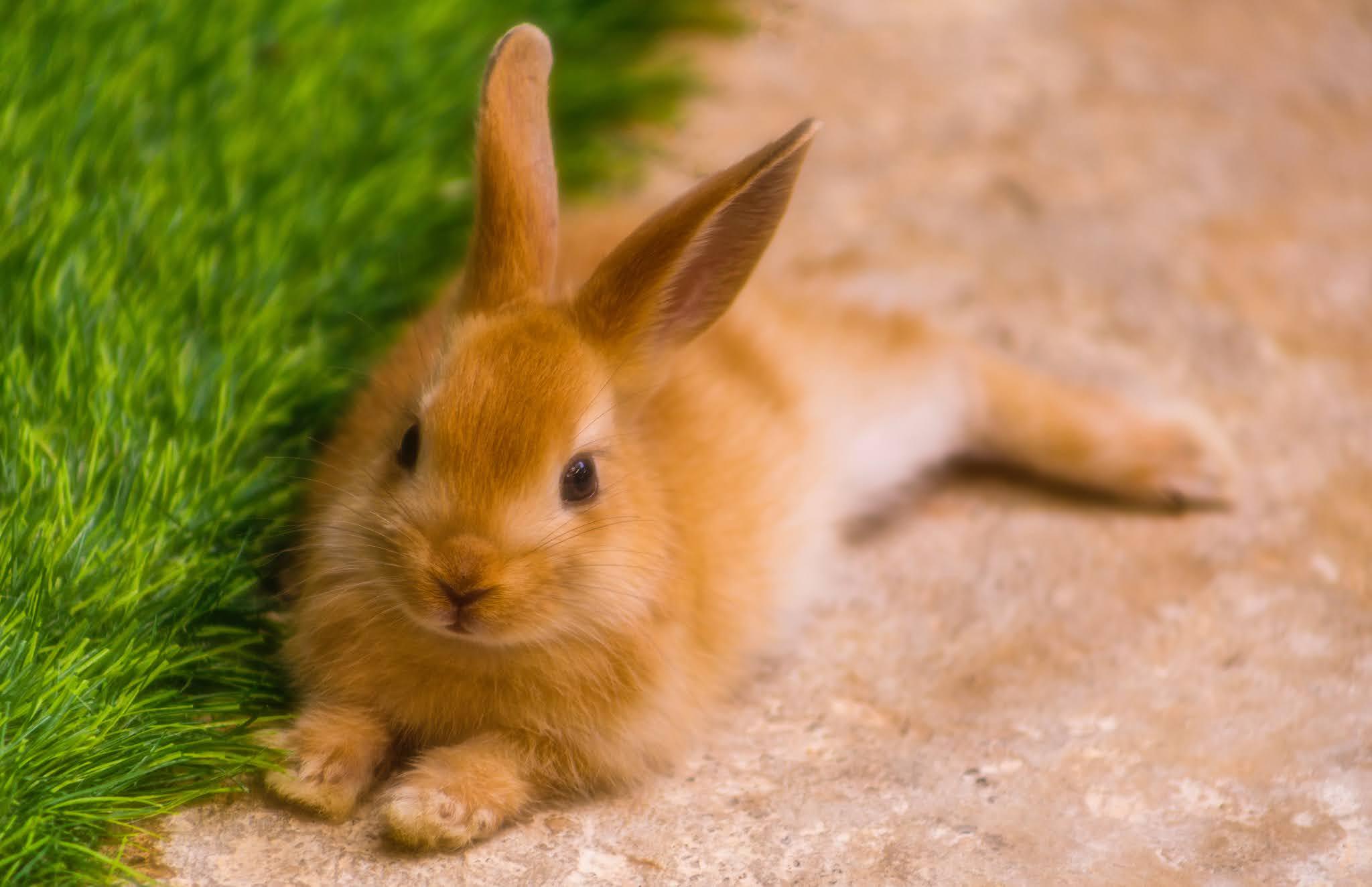 Ciekawostki o królikach, czy króliki dobrze widzą w nocy?