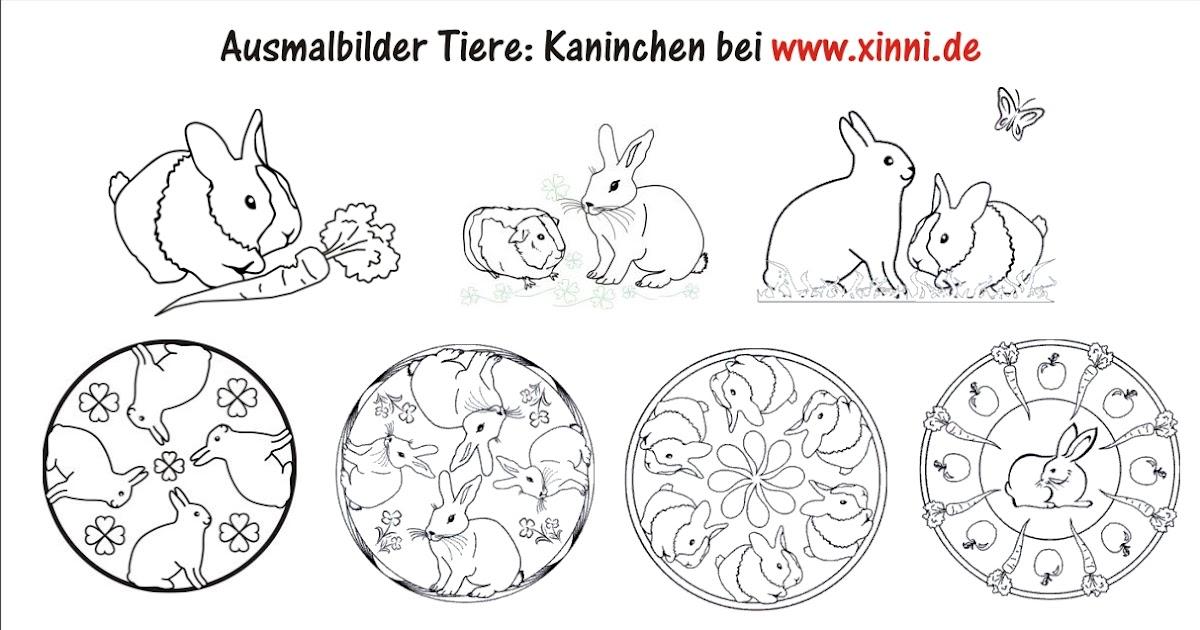 malvorlagen zum ausmalen: ausmalbilder kaninchen