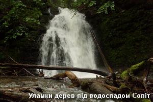 Стовбури під водоспадом