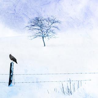 Photographic Art Frozen by Sara Harley