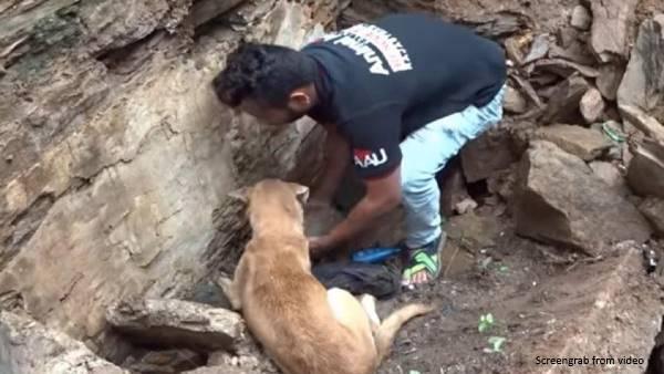 कुत्ते की चालाकी से बची उसके दो बच्चों की जान, इंटरनेट पर सेंसेशन बन गया है यह वायरल वीडियो