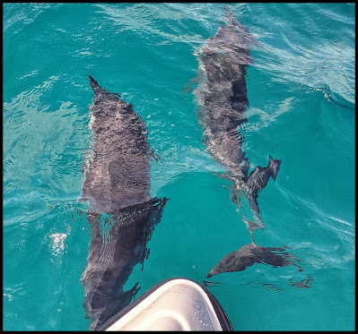 Pod of approximately 400 Dolphins on the way to the NaPali Coastline