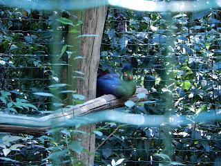 Parco Gallorose(ガッロロゼ公園)鳥写真