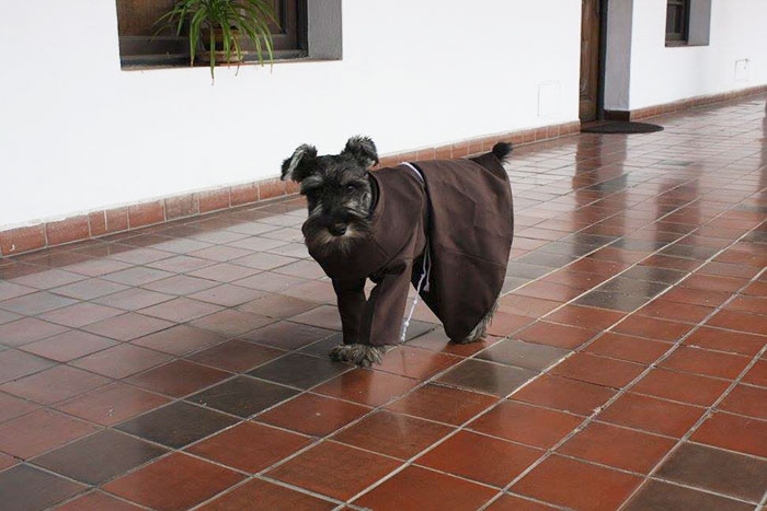 A Stray Dog Became A Monk In The Funniest And Sweetest Way