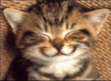 anak kucing tersenyum