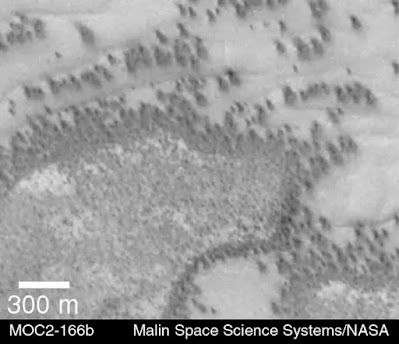 Trees-or-herd-of-animals-on-mars