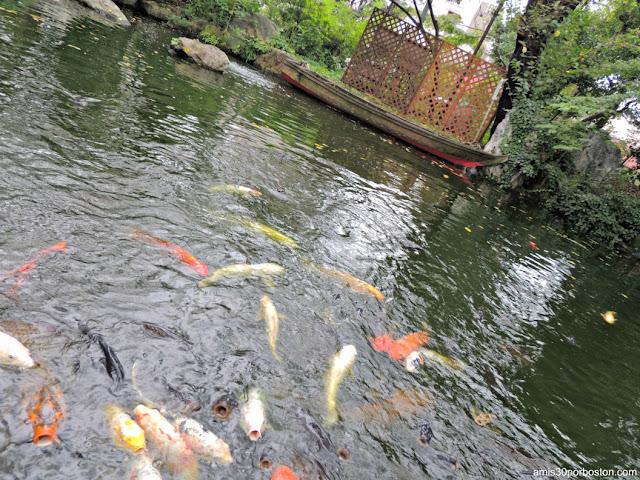 Carpas Koi del Santuario Atago en Tokio