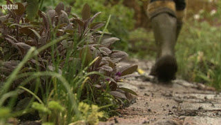 Edible Garden Garden Path