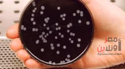 فيروس الفيالقة.. مرض تنفسي قاتل قد يصيب العالم بعد كورونا