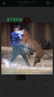 470 слов. все просто нападение тигра на человека 13 уровень