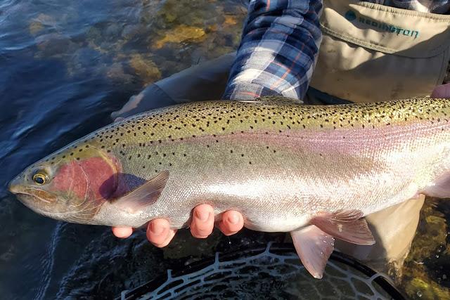 x 6 Salmon, Steelhead, Trout Micro Stone Dark Rubber Leg Fly Fishing Flies