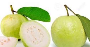 guava amrud fruit meaning in english hindi telugu