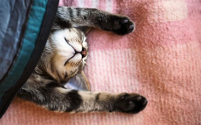 Kat onder een deken
