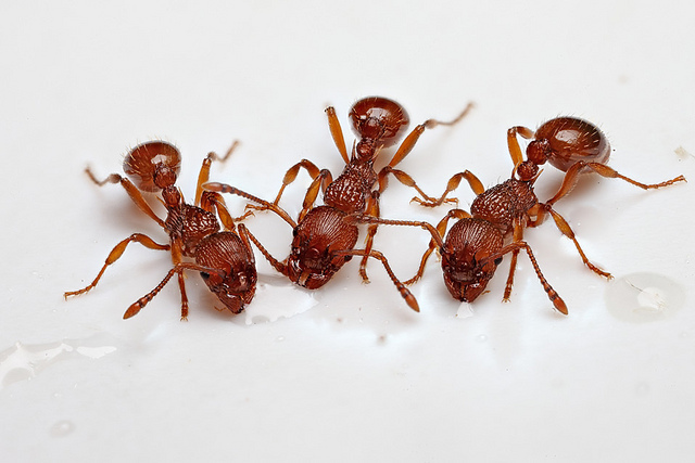 how-to-get-rid-of-ants-at-home