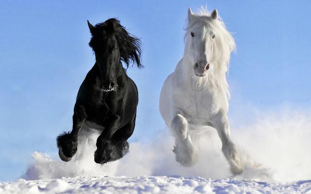Winter foto paarden in de sneeuw