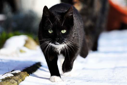 Jak pomóc kotom wolno żyjącym przetrwać zimę?