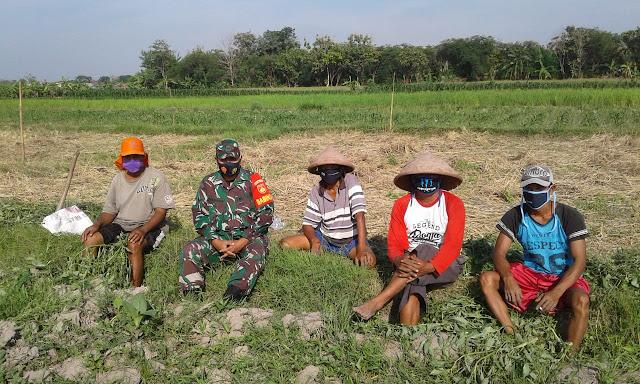 Babinsa Koramil Ceper Motivasi Petani Untuk Tingkatkan Pertanian