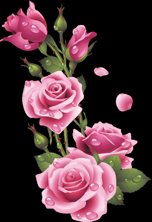 Garden roses Floral design Pink Centifolia roses Flower, flower, flower Arranging, floribunda, artificial Flower png free png