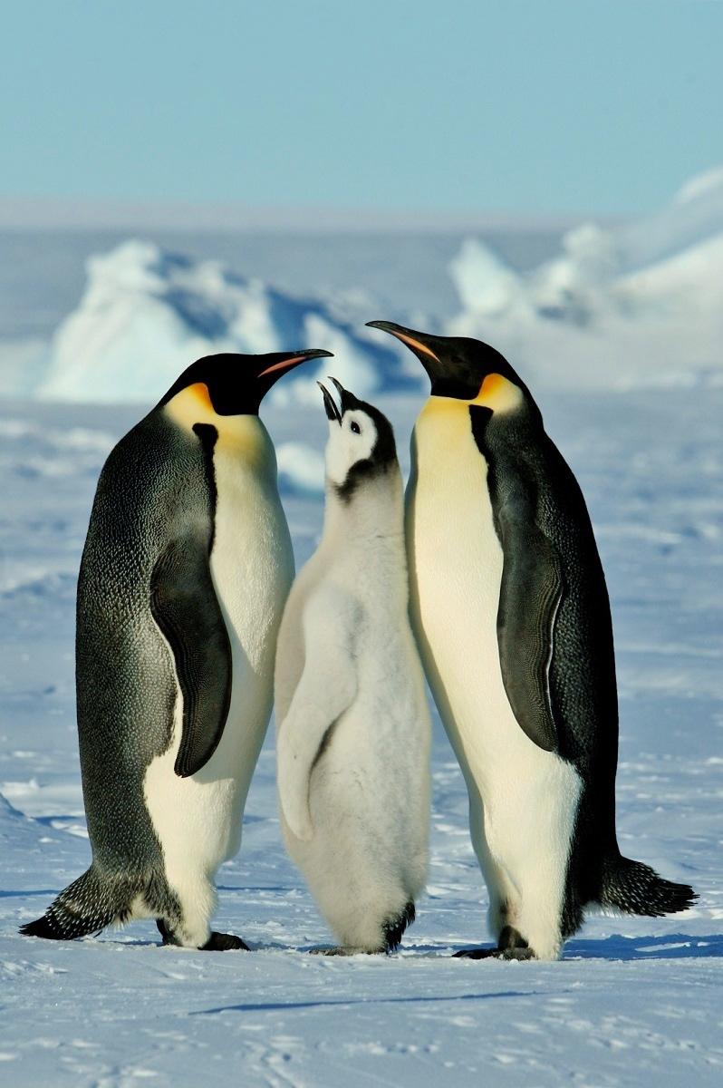 Di qua e di la ANTARTIDE  La scoperta del Polo Sud Antarctica  Discovery of the South Pole