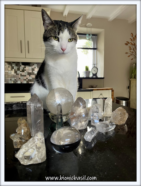 Crystal Mania with Melvyn ©BionicBasil® The Sunday Selfies