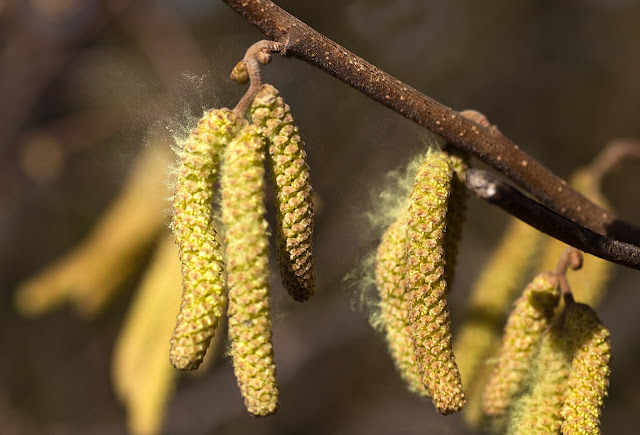 العلاجات الشعبية لحساسية الربيع