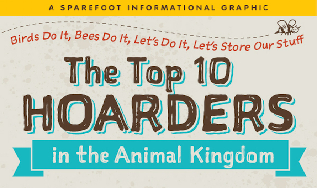 The Top 10 Hoarders In The Animal Kingdom #infographic